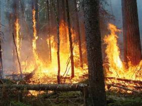 Feux de forêts: Plus de 2.200 ha touchés par les incendies depuis juin