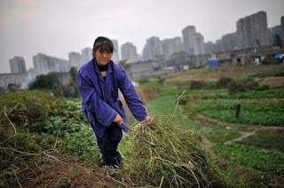 RELIZANE : Les Chinois pour cultiver les terres salines de Hmadna.