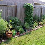 Gardening 2010, Part Two - 101_3097.JPG