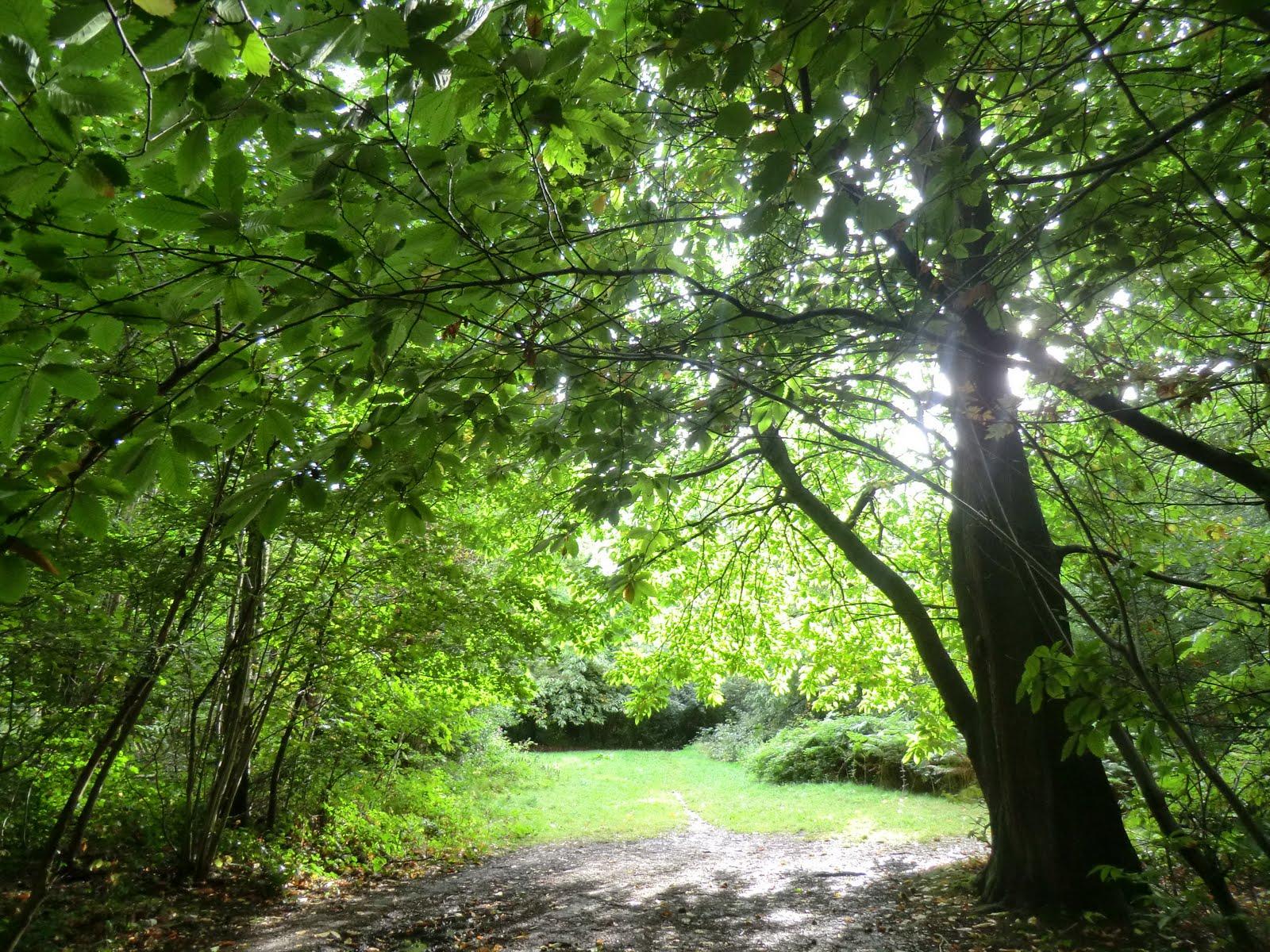 CIMG4236 Selsdon Wood