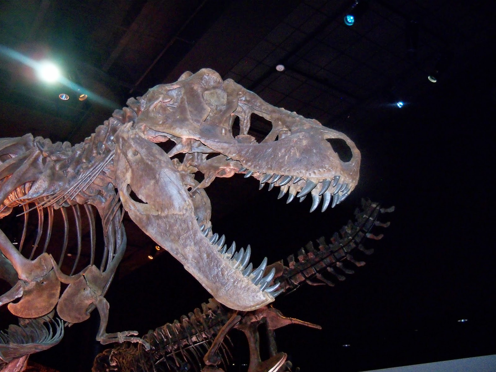 Houston Museum of Natural Science - 116_2663.JPG