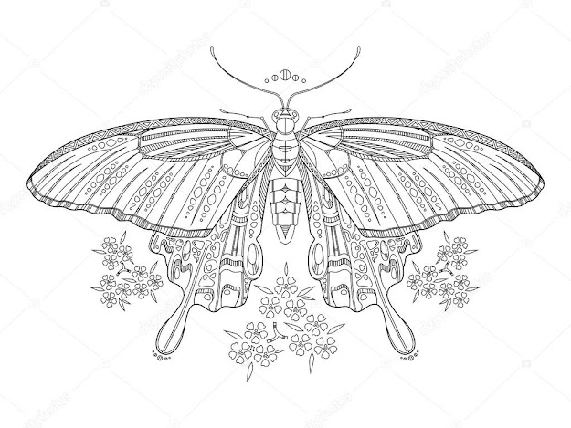 Butterfly Coloring Book For Adults Vector  Stock Illustration