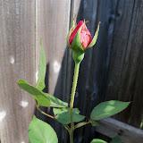 Gardening 2011 - 100_7944.JPG