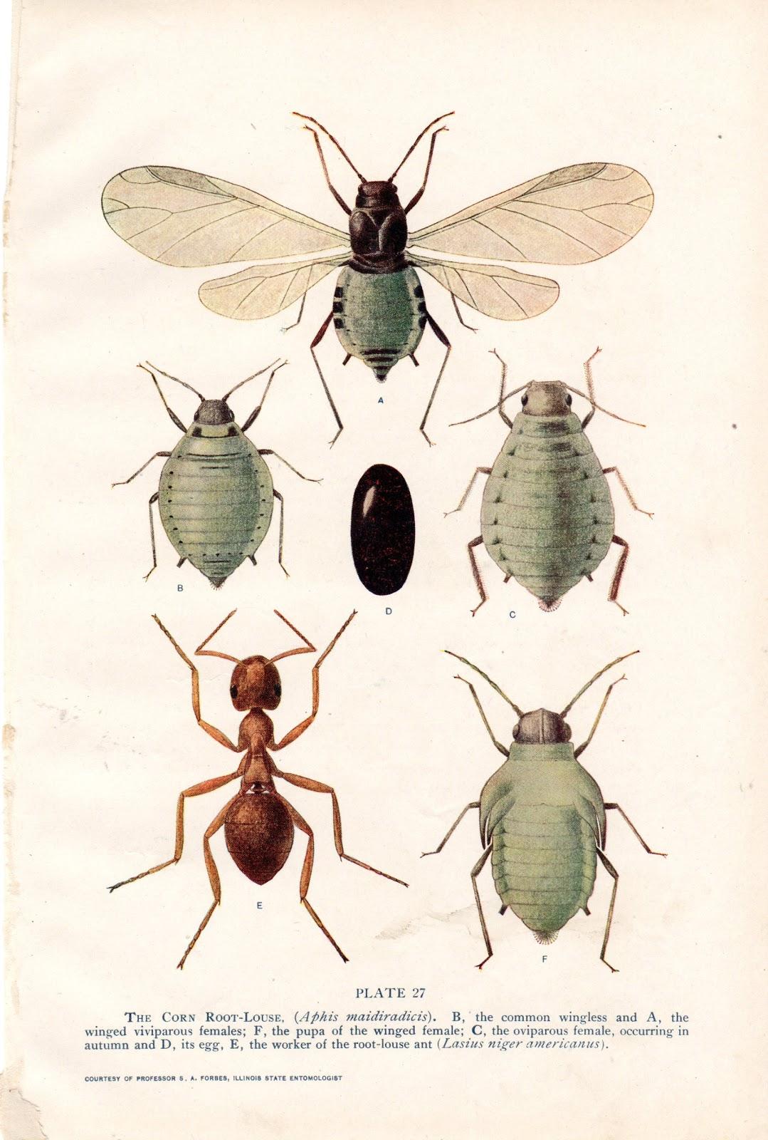 modish vintage insect prints