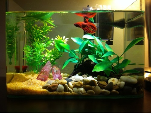 fish-tank-(55)