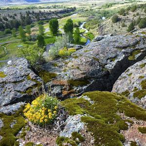 Page Springs & Malheur National Wildlife Refuge