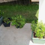 Gardening 2010, Part Three - 101_5146.JPG