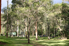 Simpson Falls picnic area, Mt Coot-tha