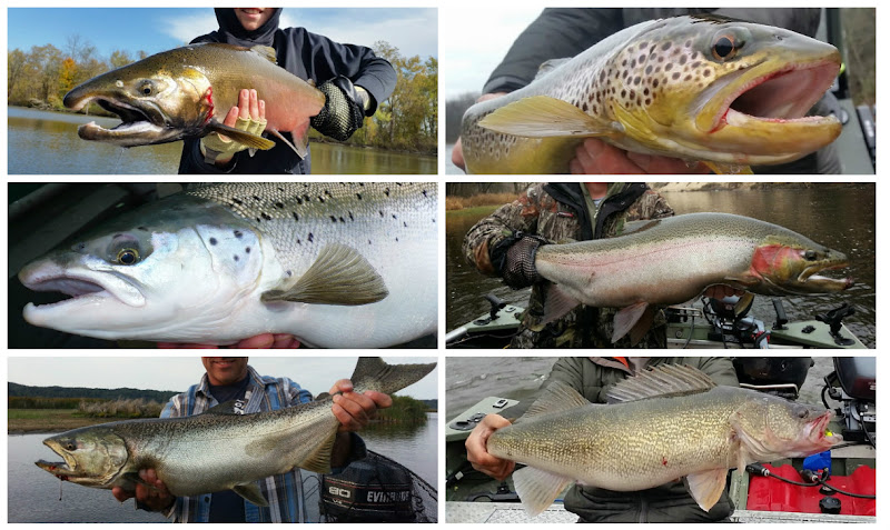 Michigan Steelhead, Salmon, Coho, Atlantic Salmon, Smallmouth Bass Guide Service