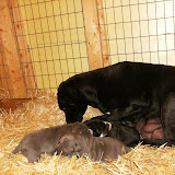 Star & True Blues February 21, 2008 Litter - HPIM0962.JPG