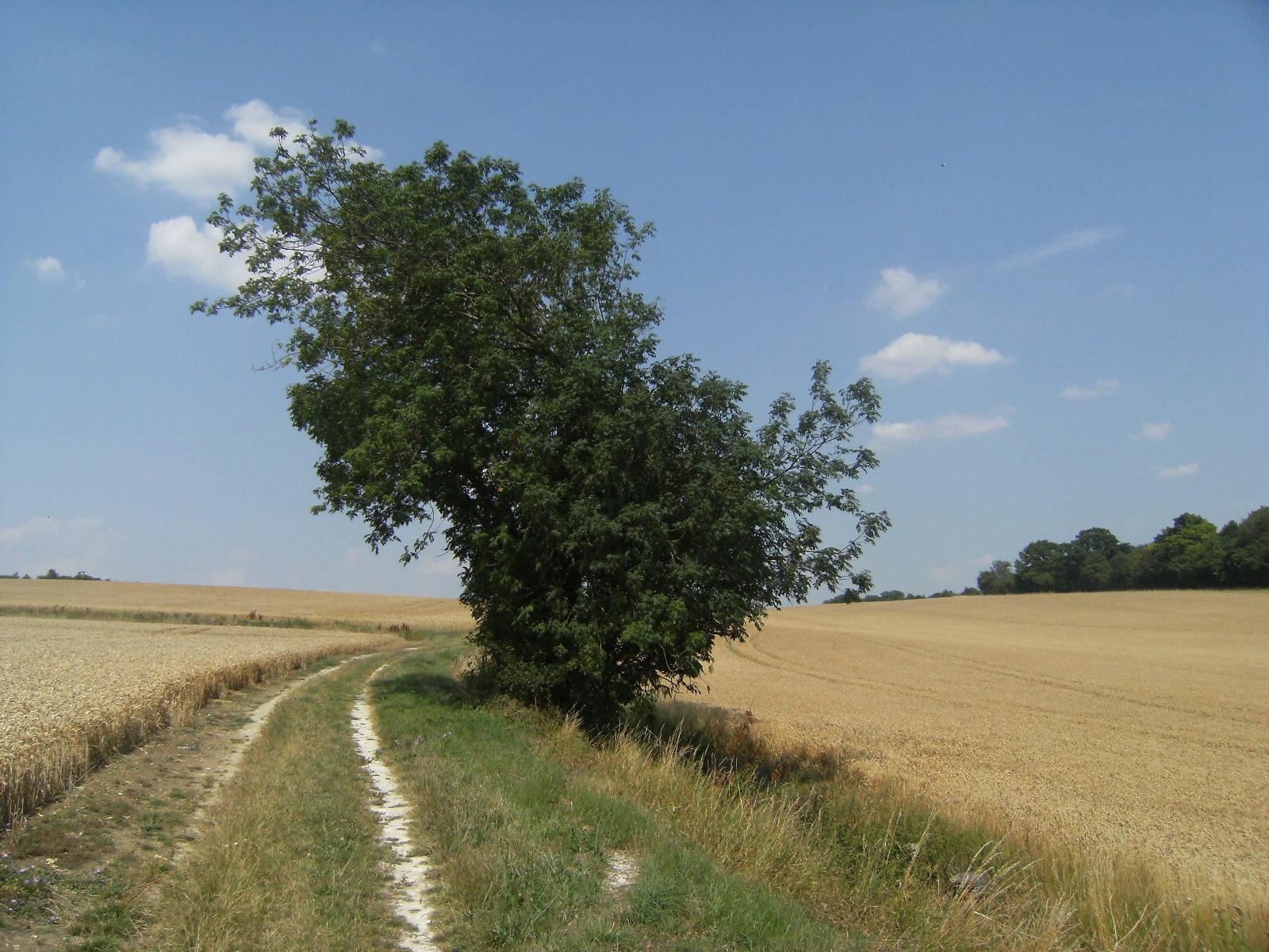 DSCF8994 Essex farmland