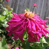Gardening 2012 - IMG_3743.JPG