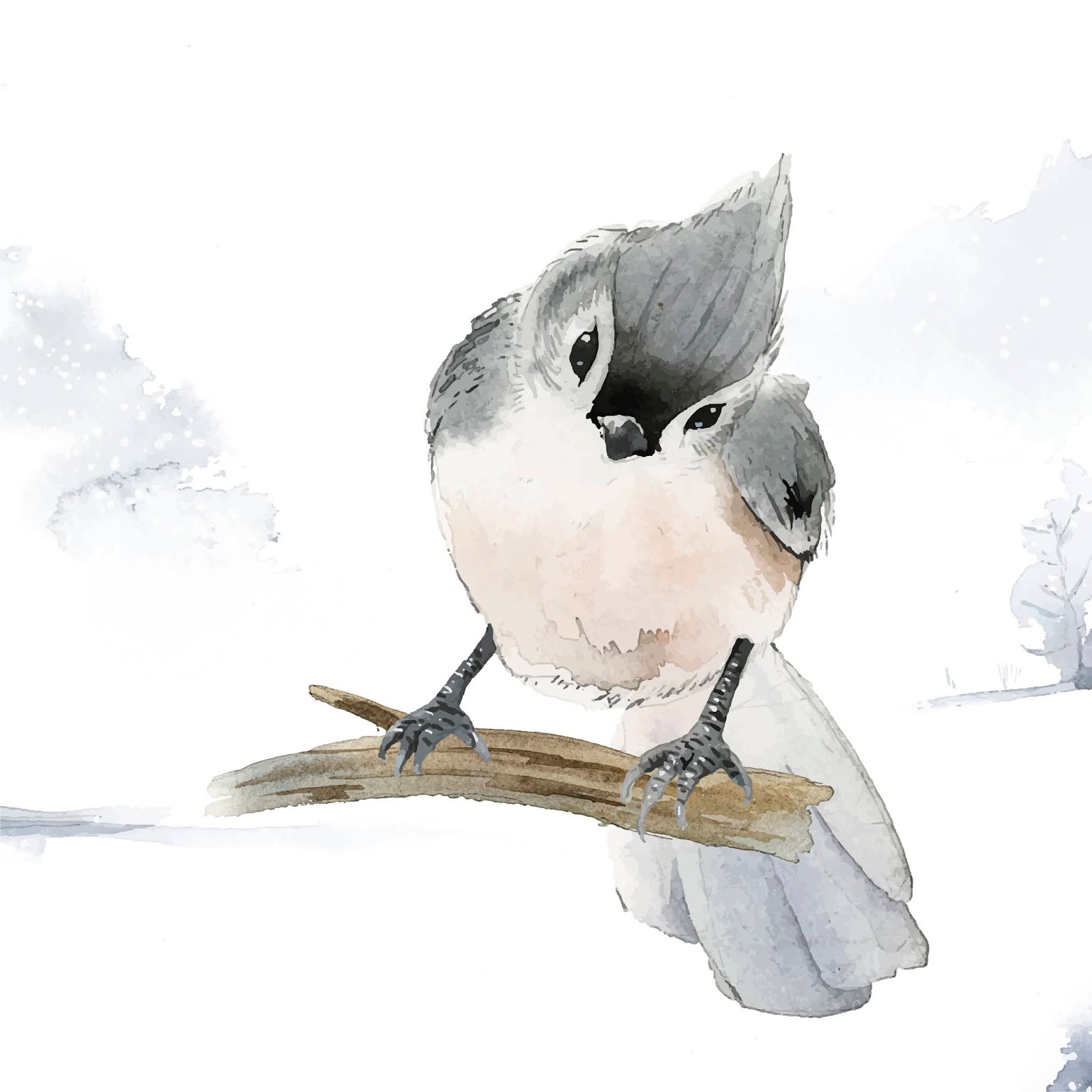 Tufted Titmouse Bird Wintertime Watercolor Vector (1) Free Download Vector CDR, AI, EPS and PNG Formats
