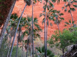 Treking med palmami