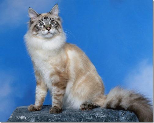 22 fotos de gats (37)