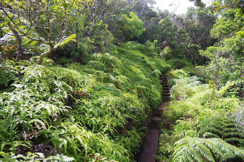 Hawaii 2013 - Best Story-Telling Photos - IMGP0116.JPG
