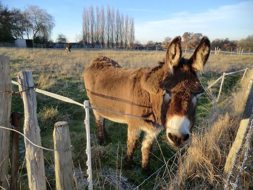 CIMG7577 Friendly donkey