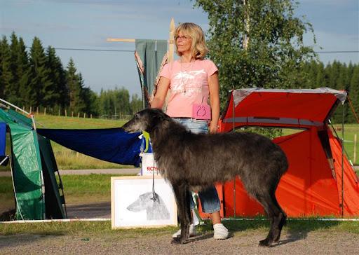 BIS5 and 2nd best veteran dog, Sweetscot Calvin Klein
