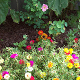 Gardening 2009 - 101_4497.JPG