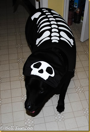 Matt Halloween 2