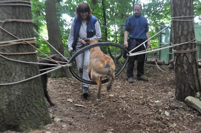 Survival voor Baas en Hond 2012 - DSC_0396.JPG