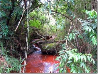 estacao-andorinhas-rio-do-salto