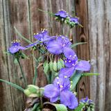 Gardening 2014 - 116_1806.JPG