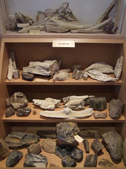 Fa kövületek