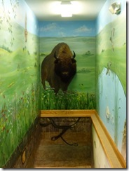 Bison mount with wall painting