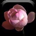 Lotus Flower Time Lapse Live icon
