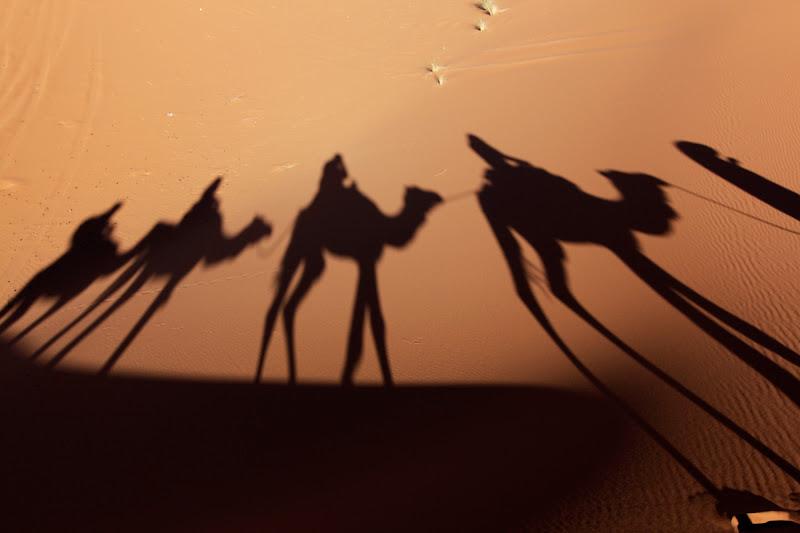 Sombras de una caravana de camellos en el desierto
