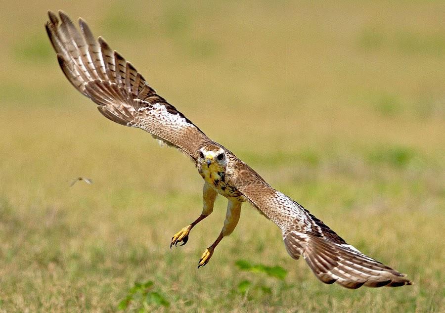 WEB by Deva Raja - Animals Birds