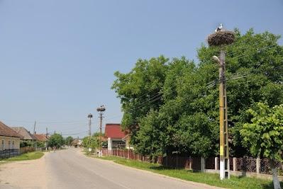 Storchennester in Salsig