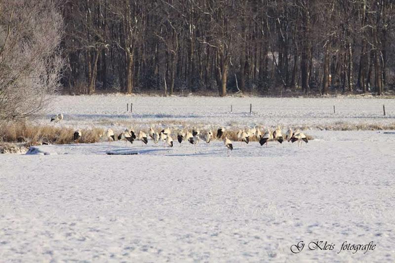 Winter - Winter-027.jpg