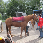 paarden4daagse Zorgvliet 2012 031.jpg