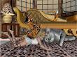 Fairy And Big Cat