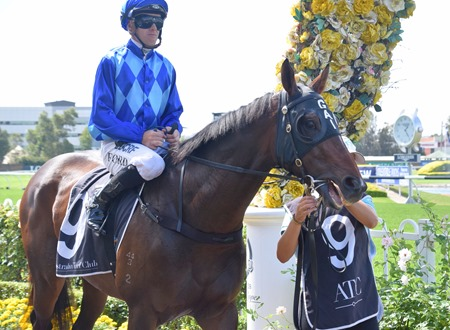 race 3_manion cup_imperial avaitor 1