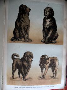 Las razas de perros también merecen una lámina a todo color.