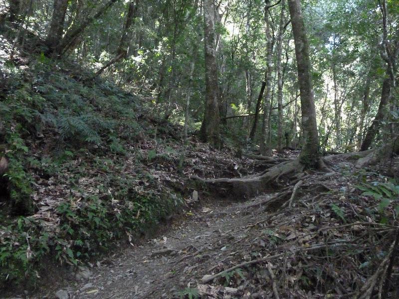 TAIWAN. Dans une region ou habitent les aborigenes de l ethnie Atayal - P1110797.JPG