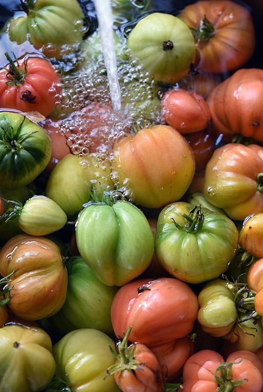 [tomater%5B2%5D]