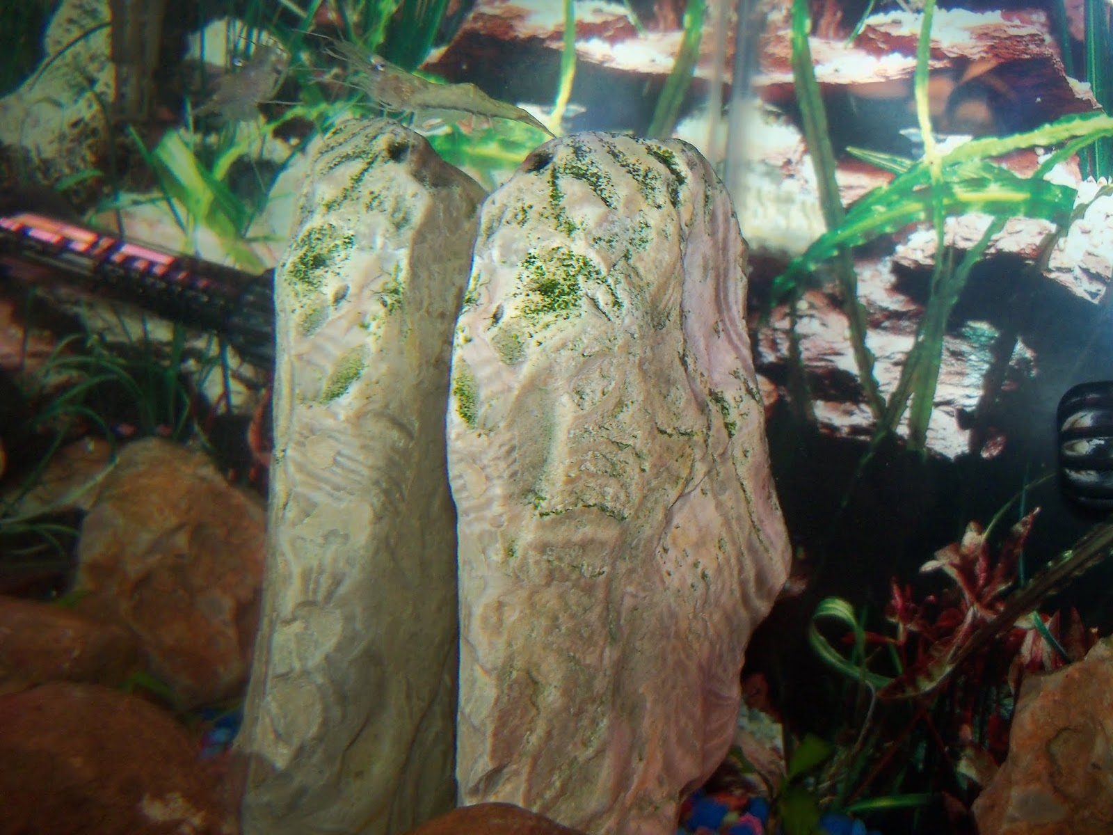 Fish - 115_6573.JPG