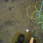 Bíldudals-grænar 2007 066.jpg