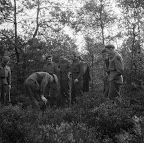 Soldiers of the 50th (Northumbrian) Infantry Division searching for mines with a metal detector. Date: September 1944. Photographer: Willem van de Poll. Source: Dutch National Archive
