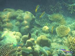 pulau harapan 8-9 nov 2014 diro 14
