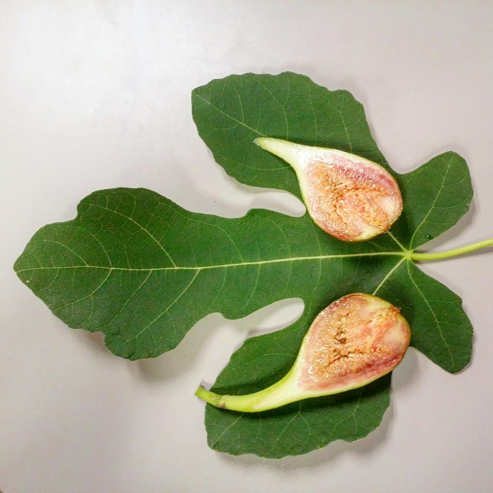 Seattle Garden & Fruit Adventures: 7/31/15 More Ripe Figs