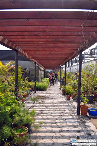 芬園花卉生產休憩園區 - 處處可見植物盆栽