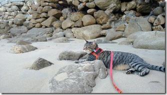 fredy-na-praia-em-bombinhas