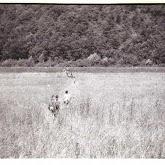 n029-009-1966-tabor-sikfokut.jpg
