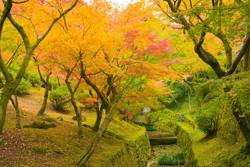 京都 東福寺 紅葉 写真5