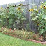 Gardening 2009 - 101_4963.JPG
